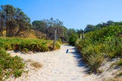 Erba la duna coperta della spiaggia sulla spiaggia alla spiaggia Australia di Valla fotografie stock