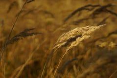 Erba la foresta asciutta dei prati dei giacimenti della carta da parati del fondo della natura dei midgrass di siccità marrone de Fotografie Stock Libere da Diritti
