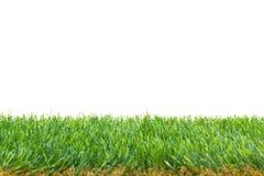 Confine isolato dell'erba Fotografia Stock Libera da Diritti