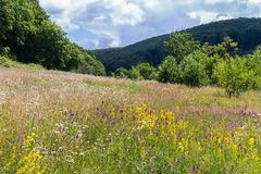 Erba luminosa del campo fra l'erba asciutta nella radura vicino alla foresta alta della montagna Immagine Stock Libera da Diritti
