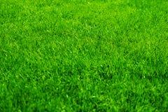 Erba luminosa, succosa, verde Area del prato inglese Fotografie Stock Libere da Diritti