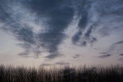 Erba lunga con il cielo di alba Fotografia Stock Libera da Diritti