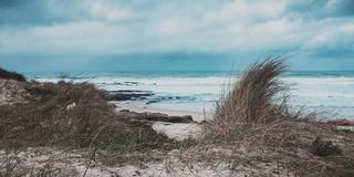 Erba marina in una riva della spiaggia fotografie stock