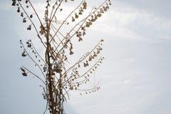 Erba marrone asciutta in neve bianca Le piante asciutte compaiono attraverso neve sciolta fotografia stock