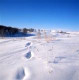 Erba nel campo di neve Fotografia Stock