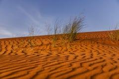 Erba nel deserto Immagine Stock Libera da Diritti