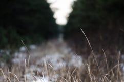 Erba nel fondo di acutezza della priorità alta della foresta vaga Fotografia Stock