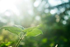 Erba nell'ambito della luce del sole Fotografia Stock
