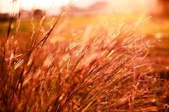 Erba nell'ambito della luce intensa del sole Fotografia Stock