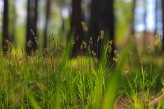 Erba nella foresta Fotografie Stock Libere da Diritti