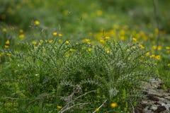 Erba nella natura del paesaggio di luce del giorno del campo che coltiva le montagne Immagini Stock