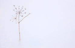 Erba nella neve Fotografia Stock Libera da Diritti