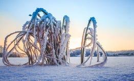 Erba nella neve Immagine Stock