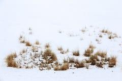 Erba nella neve a dicembre Fotografia Stock Libera da Diritti