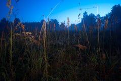 Erba nella notte Immagini Stock