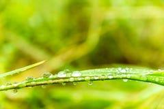 Erba nelle gocce di acqua Fotografia Stock Libera da Diritti
