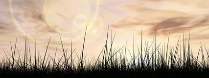 Erba nera sopra il fondo di tramonto del cielo Fotografia Stock