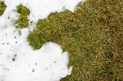 Erba in neve riscaldato nell'erba del ivyhlyadaye della neve di inverno da sotto la neve con un'area in bianco per lo spazio dell fotografie stock libere da diritti