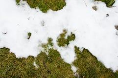 Erba in neve riscaldato nell'erba del ivyhlyadaye della neve di inverno da sotto la neve con un'area in bianco per lo spazio dell immagine stock