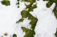 Erba in neve riscaldato nell'erba del ivyhlyadaye della neve di inverno da sotto la neve con un'area in bianco per lo spazio dell fotografia stock libera da diritti