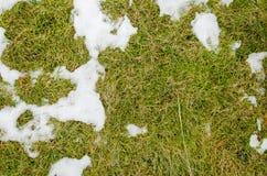 Erba in neve riscaldato nell'erba del ivyhlyadaye della neve di inverno da sotto la neve con un'area in bianco per lo spazio dell immagini stock