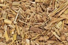 Erba organica dell'erba o del deenanath di Kyasuwa & x28; Pedicellatum& x29 del Pennisetum; Immagini Stock
