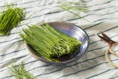 Erba organica verde cruda del grano fotografia stock libera da diritti
