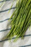 Erba organica verde cruda del grano immagine stock libera da diritti