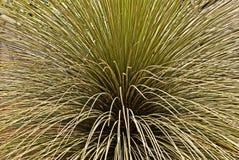 Erba ornamentale in giardino fotografie stock libere da diritti