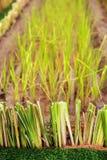 Erba per suolo e conservazione dell'acqua Fotografia Stock Libera da Diritti