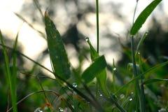 Erba piovosa di mattina immagine stock