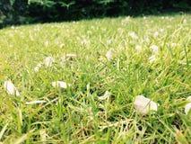 Erba in primavera Immagini Stock