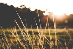 Erba quando tramonto Immagine Stock