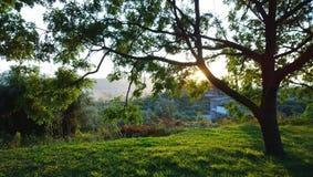 Erba ricca luminosa e vista panoramica del villaggio nel Montenegro Nella priorità alta, nel tronco di albero e nei raggi del ` s Immagini Stock Libere da Diritti