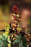 Erba rossa e verde Immagini Stock