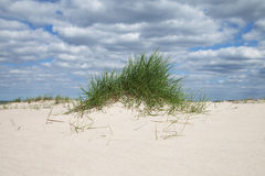 Erba in sabbia al Mar Baltico Immagini Stock