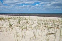 Erba in sabbia al Mar Baltico Immagine Stock