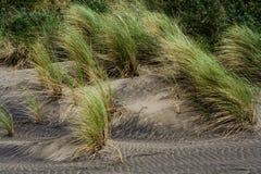 erba in sabbia nera Immagine Stock