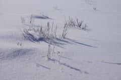 Erba secca ghiacciata su neve scintillante Fotografia Stock Libera da Diritti