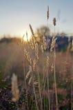 Erba secca soleggiata Fotografia Stock Libera da Diritti