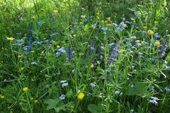 Erba selvatica di fioritura sul prato verde Fotografia Stock Libera da Diritti