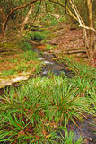 Erba selvatica ed alberi con il piccolo corso d'acqua Fotografia Stock