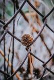 Erba selvatica nel giardino immagine stock libera da diritti
