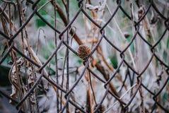 Erba selvatica nel giardino fotografia stock