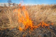 Erba selvatica su fuoco Fotografia Stock