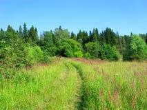 Erba selvatica sul prato, foresta, strada rurale, estate Fotografia Stock Libera da Diritti