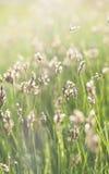 Erba soleggiata verde Immagini Stock