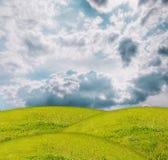 Erba sotto cielo blu Fotografie Stock Libere da Diritti