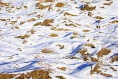 Erba sotto la neve nel campo. Fotografia Stock Libera da Diritti