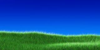 Erba su un cielo blu Fotografia Stock